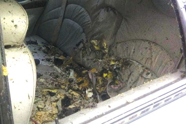 The taxi after Aaron Driver exploded a bomb in the back-seat